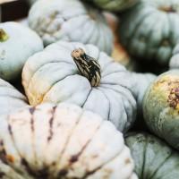Herbstmarkt, Herbst, Kiel